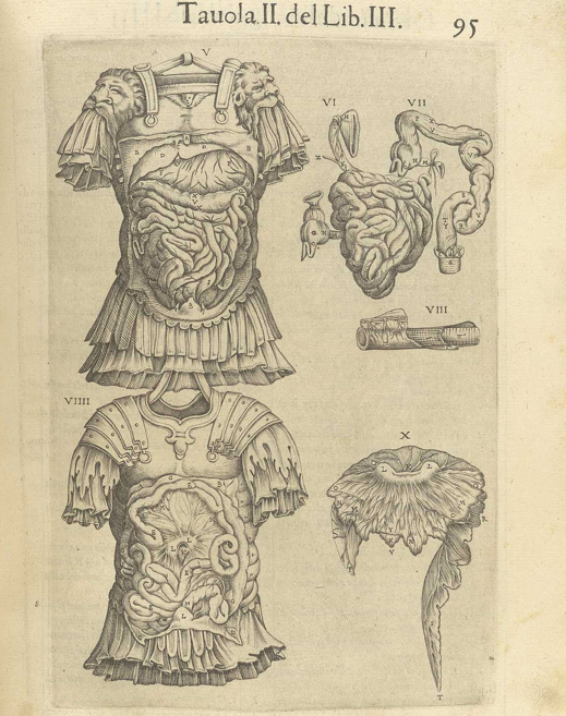 Spanish Renaissance anatomical print